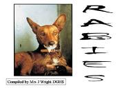 Virus Rabies Powerpoint Presentation