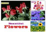 Beuatiful Flowers Powerpoint Presentation