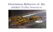 Investigating dominance hierarchies in crickets PowerPoint Presentation