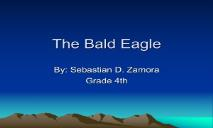 The Bald Eagle PowerPoint Presentation