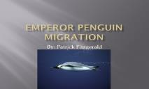 Emperor penguin migration PowerPoint Presentation