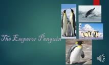 The Emperor Penguin PowerPoint Presentation