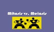 Mitosis vs Meiosis PowerPoint Presentation