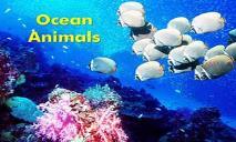 Ocean Animals (Under The Sea) PowerPoint Presentation