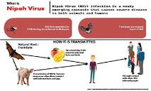What is Nipah Virus PowerPoint Presentation