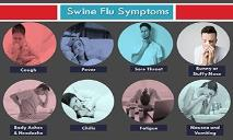 Swine Flu Symptoms PowerPoint Presentation