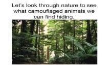 Camouflaged Animals PowerPoint Presentation