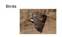 Nature Birds PowerPoint Presentation