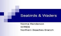 Sea birds and Water Birds PowerPoint Presentation