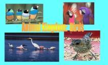 Animal Kingdom Birds PowerPoint Presentation