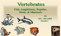 Fish Amphibians Reptiles Birds &  Mammals PowerPoint Presentation