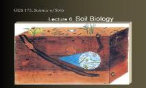 Soil Biology PowerPoint Presentation