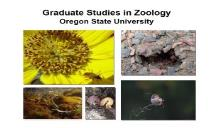 Graduate Studies in Zoology (Department of Zoology) PowerPoint Presentation