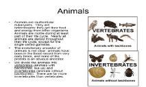 Animals Overview PowerPoint Presentation