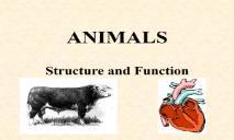 ANIMALS PowerPoint Presentation