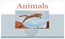 Animals wiki PowerPoint Presentation