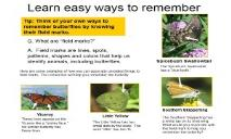 How to Identify Butterflies PowerPoint Presentation