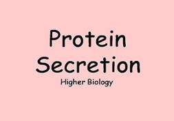 Protein Secretion Powerpoint Presentation