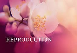 Reproduction In Plants Powerpoint Presentation