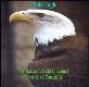 About Bald Eagle Powerpoint Presentation