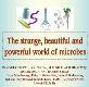 Bacteria or Virus Powerpoint Presentation