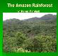 The Amazon Rainforest University of North Texas Powerpoint Presentation