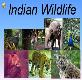 Indian Wildlife Powerpoint Presentation