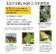 How to Identify Butterflies Powerpoint Presentation
