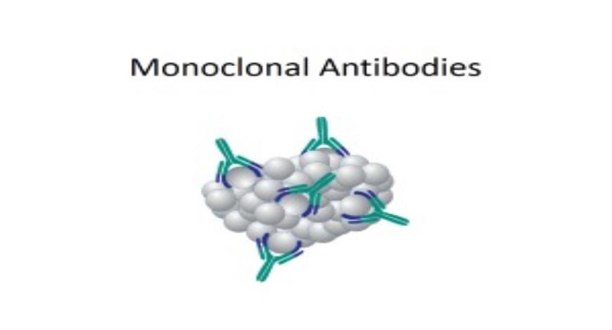 Free Download Monoclonal Antibodies PowerPoint