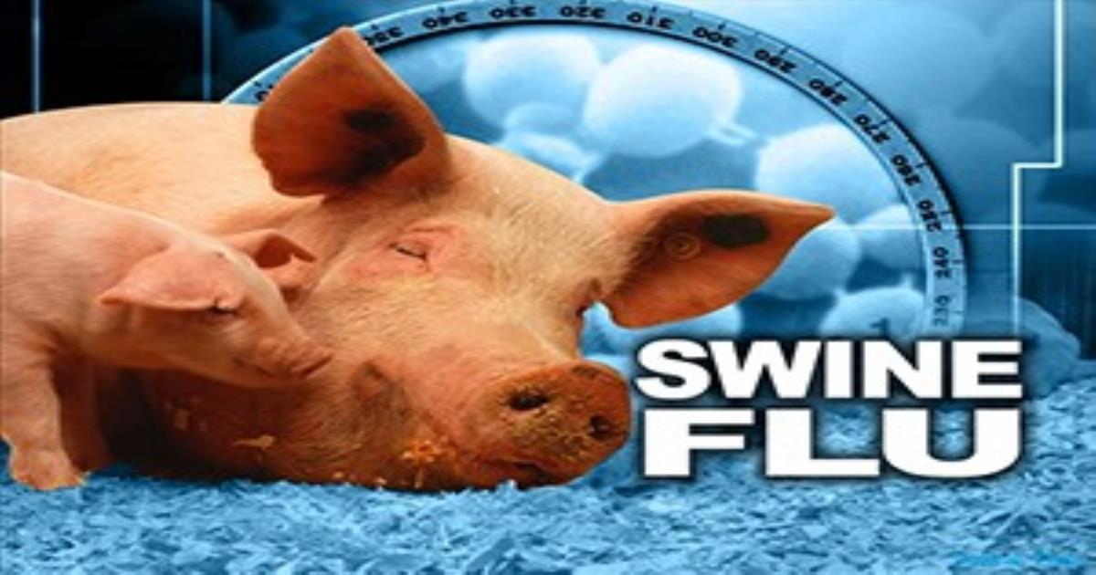 swine flu article